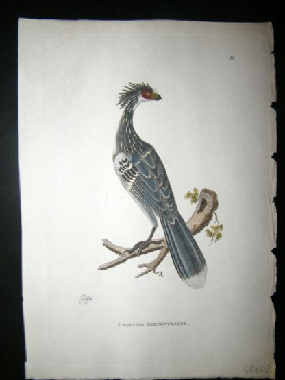 Shaw C1800's Antique Hand Col Bird Print. Crested Serpenteater